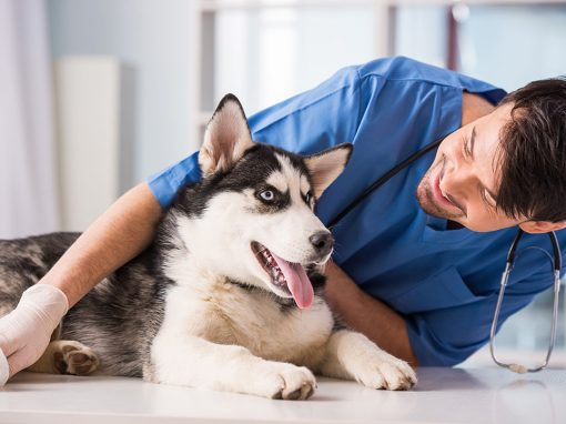 Animal Hospital – Veterinary Hospital